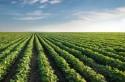 Balanço geral do agronegócio até agora