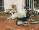 Em Passo Fundo (RS) sumiço de cães revolta a população (Veja o Vídeo)
