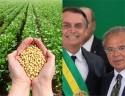 Brasil deve se tornar o maior produtor de soja do mundo em 2020, ultrapassando os EUA