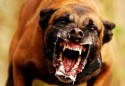 Maus jornalistas ou cães raivosos?