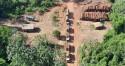 Operação da PF bate novo recorde e faz a maior apreensão de madeira ilegal da história (veja as fotos)