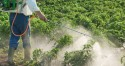 Em plena pandemia, MPF gasta mais de R$ 778 mil em campanha publicitária contra agroquímicos