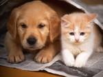 O mundo dos pets, cães e gatos, tem crise? Eles impactam o agronegócio?