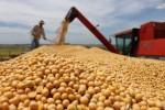 Competividade e lucratividade nas commodities