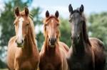 Filho de Cabral esconde cavalos 'puro sangue inglês'