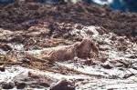 Animais presos no barro, em situação de sofrimento, são sacrificados com tiros em Brumadinho