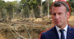 Macron apoiou projeto que previa desmatamento de milhares de hectares com mais de 120 espécies protegidas na Amazônia
