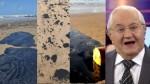 Indignado, Boris questiona: Porque a ONU, o Papa, a França e as ONGs ainda não se manifestaram? (Veja o Vídeo)