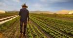 Como a agricultura salvou o Brasil