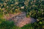 """Amazônia - uma folha no microscópio: A velha retórica de que o """"Brasil não cuida da Amazônia"""" está no fim"""