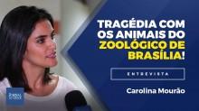 Denúncia: Descaso está matando animais no zoológico de Brasília (Veja o vídeo)