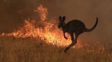 Estimativa assombrosa aponta 1,25 bilhão de animais mortos na Austrália, devido às queimadas