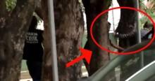 Presos algemados tentam fugir da Polícia, mas dão de cara com árvore (veja o vídeo)