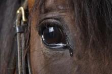 Documentário denuncia esquema cruel de abate de cavalos para exportação na Argentina