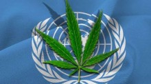 Comissão da ONU retira cannabis da lista de drogas mais perigosas