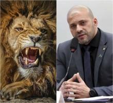 Daniel na cova dos leões – uma história com final surpreendente