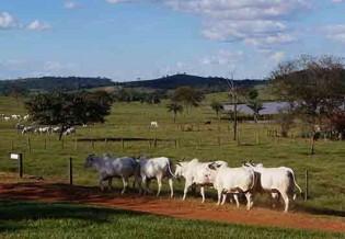 A fantástica fazenda de Palocci no Mato Grosso