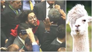 A Câmara das Lhamas brasileiras