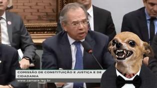 """Paulo Guedes em sessão na Câmara demonstra coragem ao """"miar para cachorro louco"""""""