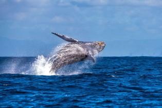Noruega é o país que mais mata baleias no mundo, diz a imprensa internacional