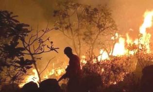 Os incêndios na Amazônia são articulados e executados por mentes e mãos humanas