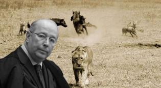 Ministro Celso de Mello, vá cachimbar formigas! (Veja o Vídeo)