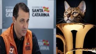 Tem gato na tuba?