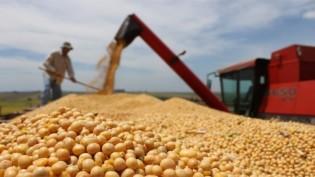Mesmo durante a pandemia, Brasil bate recorde na produção de alimentos