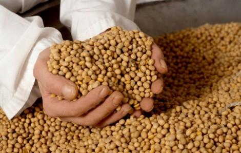 Tratamento industrial de sementes: situação atual e perspectivas