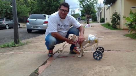 Limitações - ponderações de um cachorro cadeirante