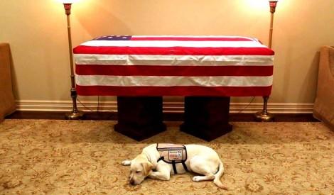 O exemplo de fidelidade de Sully, o labrador de George W. Bush