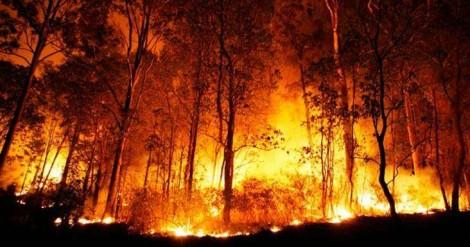 Caso Amazônia: a extrema imprensa faz para a mente o que a pólvora fez para a guerra