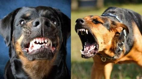 A parábola dos cães raivosos retrata como o povo brasileiro está vivendo em meio a pandemia