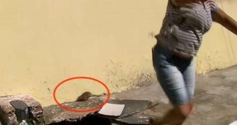 Ratazana invade transmissão ao vivo da Globo e causa alvoroço (veja o vídeo)