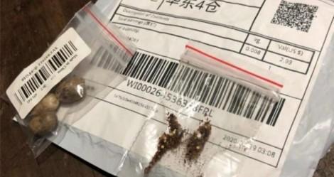 Sementes misteriosas da China tem fungos, bactérias e possíveis pragas