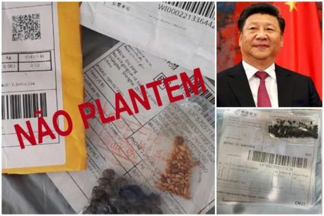 Sementes misteriosas: mais um ataque da China?