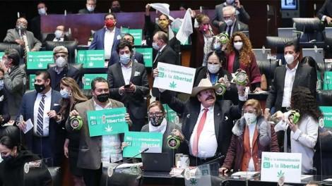Senado aprova legalização da maconha, no México