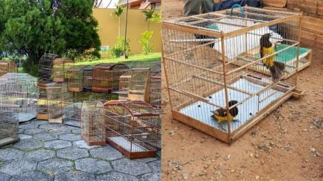 PF prende um dos maiores traficantes de animais silvestres do Brasil