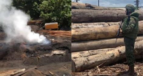 Em defesa da Floresta Amazônica, PF está no encalço da extração ilegal de madeira