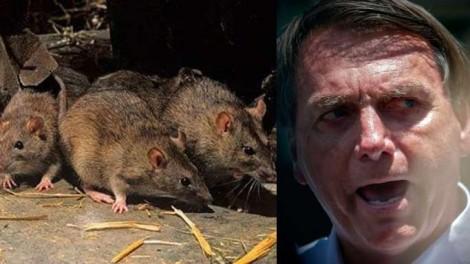Os ratos infestaram tudo… Impossível combatê-los com um sorriso nos lábios