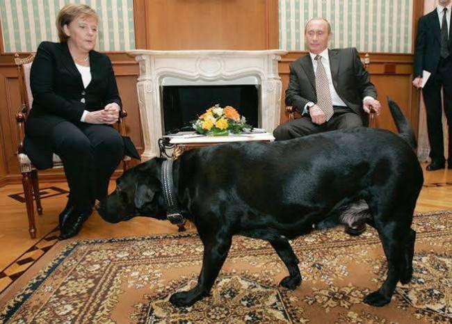Foto do encontro entre Angela Merkel e Vladimir Putin
