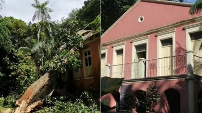 Fotomontagem: Árvore tombada. Fachada do prédio.