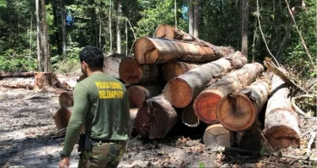 Imagens de um acampamento de desmatamento ilegal encontrado durante as diligências de investigação - Foto: Divulgação/PF