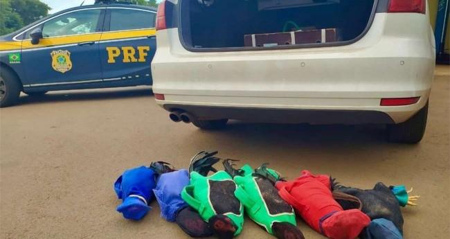 Galos transportados em veículo da Prefeitura de Boa Vista da Aparecida pelo prefeito, Leonir Antunes dos Santos. Foto: Polícia Rodoviária Federal