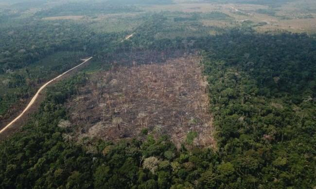 Mais proteção para a Floresta Amazônica - Reprodução internet